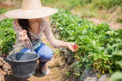 Les avantages des fermes cueillettes