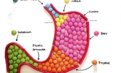 Le corps humain en bonbons