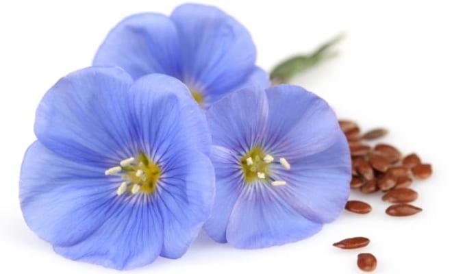 bienfaits fleurs de lin