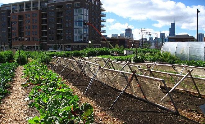 Les Jardins Collaboratifs : l'agriculture au cœur de la ville !