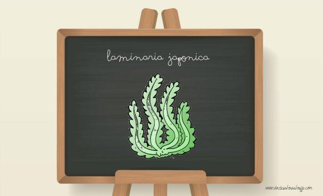 laminaria japonica