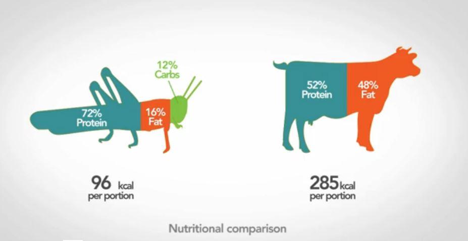 La consommation d'insecte: une alternative écologique et nutritionnelle?