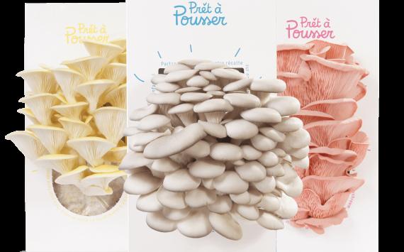 Prêt-à-Pousser : la box qui fait pousser des champignons comestibles