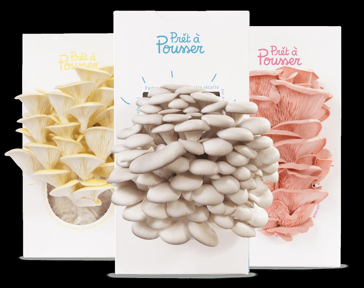 Kits de champignons Pret a Pousser