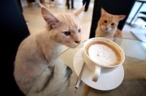 Le Café des Chats, le premier bar à chat parisien