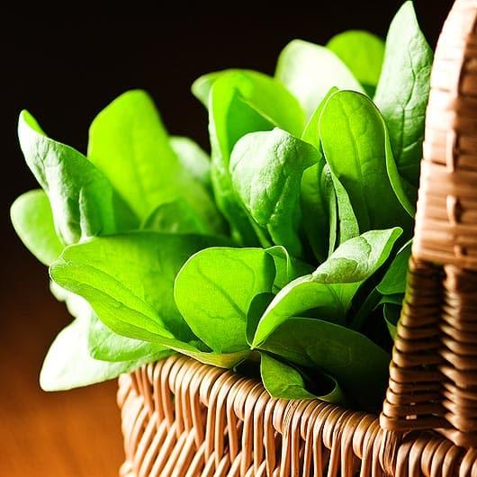 Santé: Les véritables bienfaits des épinards