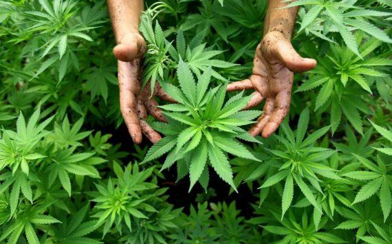 Le cannabis soigne-t-il ?