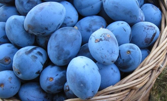bienfaits prunes santé