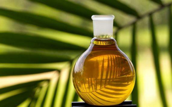 Faut-il vraiment avoir peur de l'huile de palme ?