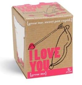 graines de pois doux idées cadeaux saint valentin