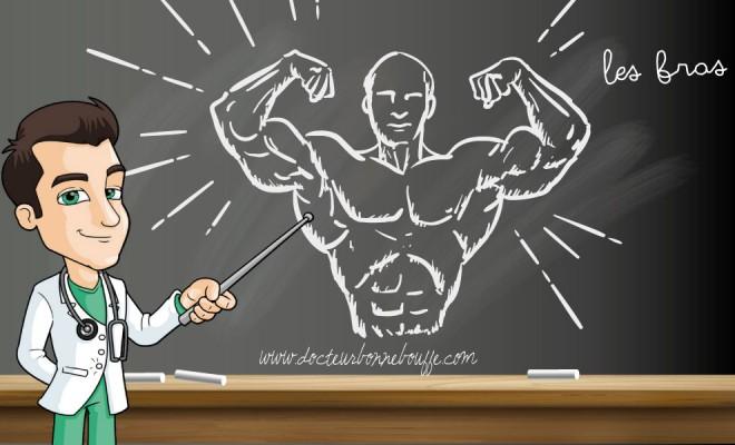 Musculation   Comment travailler les bras sans matériel   b9e6341aa19