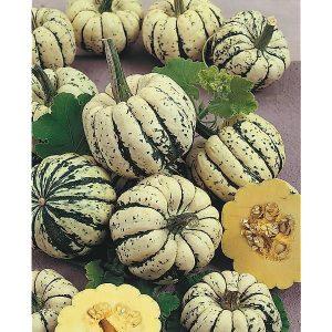 légume :courge sweet