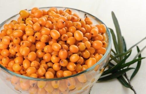 Argousier fruits