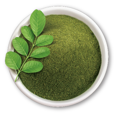Moringa oleifera, le super-aliment