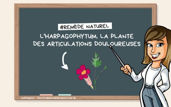 L'harpagophytum : le remède miracle des articulations douloureuses ?